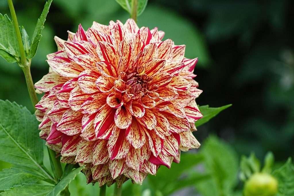 Afbeelding bloem